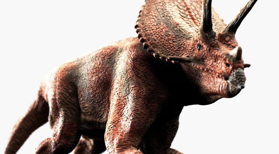 Dinosaurier - Triceratops